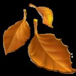 Смайл Падающие листья ВКонтакте