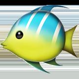 Смайл Тропическая рыба ВКонтакте